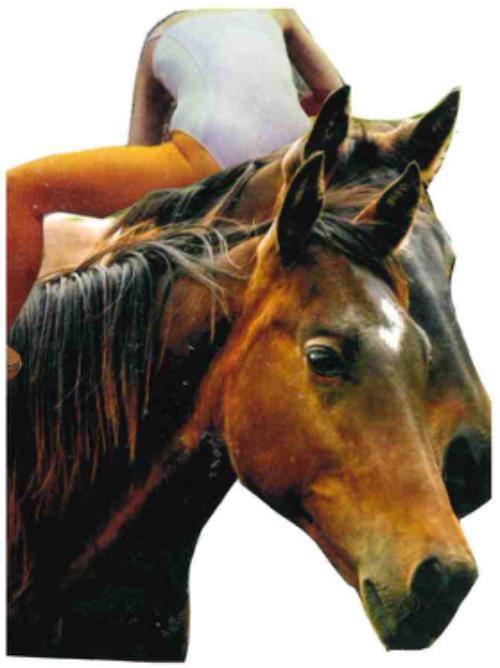 Image of someone riding a horse backward.